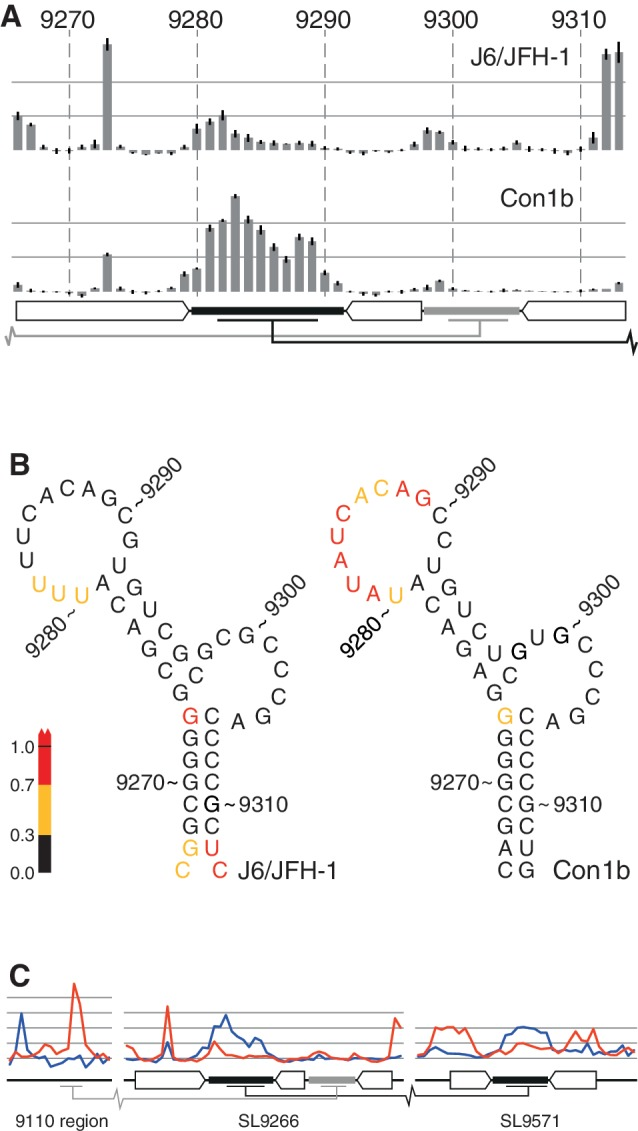 Comparative SHAPE analysis of native RNA structures. ( A ) SHAPE mapping of J6/JFH-1 and Con1b–luc–rep SL9266. The bars represent the relative exposure of the numbered nucleotides across SL9266 with the standard error of four independent gels (two short templates, two long) indicated. Duplexed and loop regions of SL9266 are indicated using the schematic representation used in Figure 1 B. Long-range interacting regions are indicated with grey (upstream) and black ('kissing loop') bars. ( B ) RNA structure representation of the data presented in Figure 2 A, colour coded to highlight relative exposure of the terminal loop of Con1b–luc–rep. ( C ) Comparative analysis of the 9110 region, SL9266 and SL9571 (left to right, respectively) of native unmodified templates of Con1b–luc–rep (blue) and J6/JFH-1 (red). Duplexed and loop regions of RNA structures indicated as described in Figure 2 A.