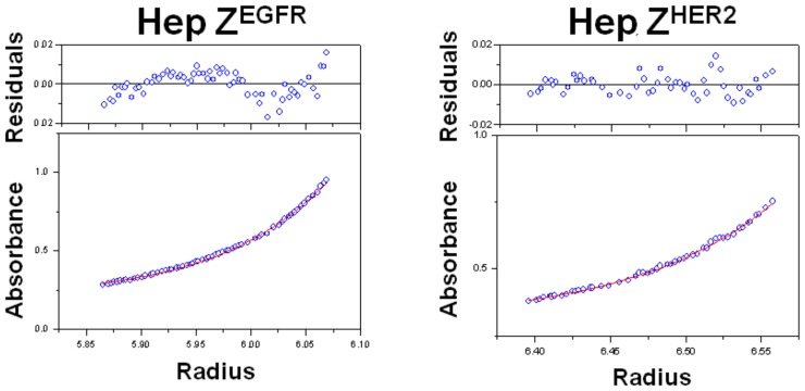 Determination of the molecular weights of the heptameric targeting ligands by analytical ultracentrifugation analysis. Purified heptameric Z EGFR and heptameric Z HER2 ligands were centrifuged at 10,000 g for 20 h. Absorbances at 280 nm were recorded every two hours.