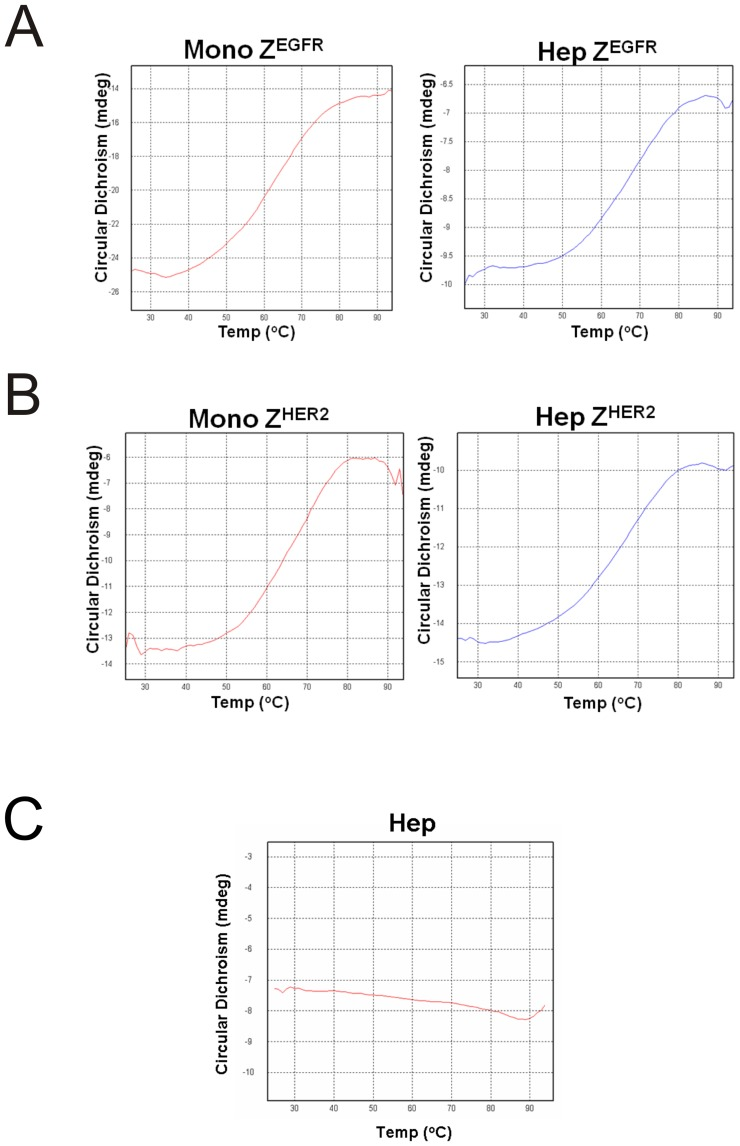 Heat stability assessment of the monomer and the heptamer by circular dichroism analysis. (A) Monomeric and heptameric Z EGFR , (B) monomeric and heptameric Z HER2 targeting ligands, and (C) heptameric core itself were prepared in a 10 mM phosphate buffer, pH 7.4. Temperature was increased from 25°C to 94°C. Spectra were recorded at various temperatures. The ellipticity at 220 nm was used for the analysis.