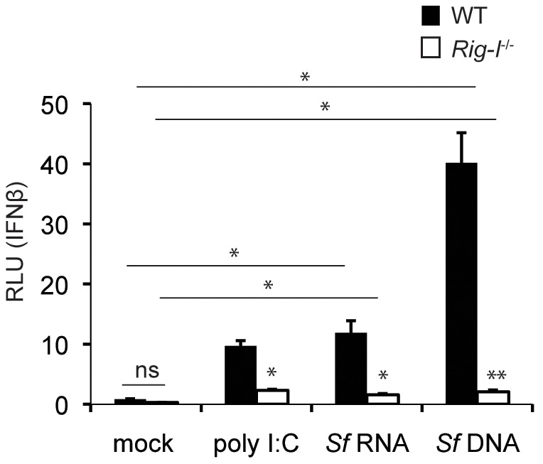 S. flexneri  nucleic acids are sufficient to induce type I IFN production via RIG-I. Low molecular weight poly (I∶C), extracted  S. flexneri  RNA treated with DNase I, or  S. flexneri  DNA treated with RNase were transfected into MEFs at 0.4 µg ligand/well. Eight hours post transfection, supernatants were added to L929-ISRE cells, which harbor an IFNβ-responsive luciferase reporter. Where appropriate, significant statistical differences are indicated as follows: ns, not significant; *, p