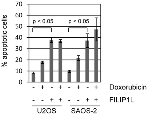 """FILIP1L expression induces cell death. Ectopic expression of one of the identified genes, FILIP1L, caused significant induction of apoptosis on its own. U2OS and SAOS-2 cells were transfected with vector control (designated as """"–"""" in the FILIP1L legend) or V5/His tagged FILIP1L expression plasmid. Cells were additionally treated with control or 200 ng/ml doxorubicin. Cells were harvested 24 hours after transfection and apoptotic cells were quantitated by measuring sub-G1 DNA content by propidium iodide staining. Apoptosis caused by FILIP1L expression in either cell type was not further augmented by treatment with doxorubicin."""