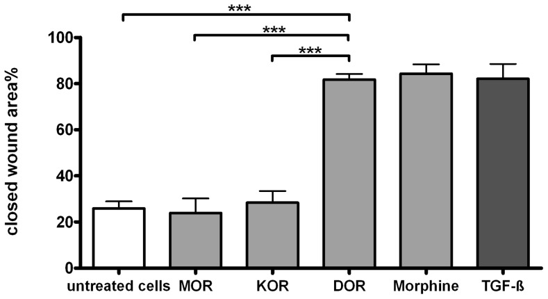 Effect of selective opioid receptor agonists on the 'wound closure' in TR146 cells. Closed wound area % after 14 hours of exposure with selective opioid receptor agonist for MOR (DAMGO), KOR (U-69593) and DOR (DPDPE) (100 nM) in comparison to morphine (100 nM). TGF-ß (1 ng/ml) served as a positive control, (n = 3).***p≤0.001.