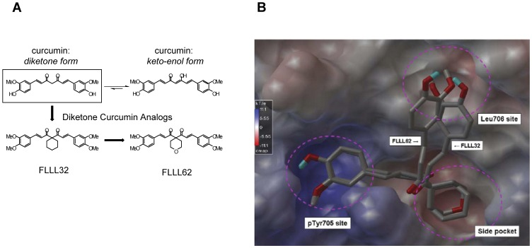 Molecular structure of FLLL32 and FLLL62 curcumin analogs. (A) Structural representation of curcumin and the FLLL32 and FLLL62 diketone analogs. (B) Computational representation of FLLL32 and FLLL62 binding to the STAT3 SH2 domain. The SH2 surface was shown with electrostatic potential, with blue representing positive charged surface and red representing negative charges. Both compounds bind to the pTyr705 site identically with a slight difference occurring at the Leu706 site.