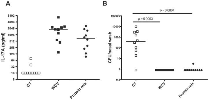 Protection against colonization by intranasal immunization with a mixture of proteins. Mice were intranasally immunized with a mixture (Protein mix) containing 4 μg of SP0435, SP1534, and SP2070 and 1 μg of cholera toxin (CT) as adjuvant; control mice received CT alone or WCC with CT (WCV). Blood was obtained 3 weeks after last immunization and mice were challenged one week later with strain 0603. Density of colonization was determined one week after challenge by quantifying pneumococcal carriage from nasal washes. (A) IL-17A production was determined in vitro from whole blood stimulated with pneumococcal whole-cell antigen. (B) Mice immunized with the WCV or the protein mixture were significantly protected against colonization compared to mice that received CT alone. Bars indicate median values and P values were determined by Mann-Whitney U test compared to mice immunized with CT alone.