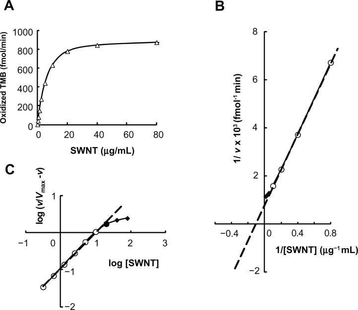 Binding of the SWNT antibody complex to its specific target. ( A ) Typical saturation curve. ( B ) Lineweaver–Burk plots. The data derived from the saturation curve were fitted to the dashed line (see text). The line represents 1/V max (obtained from ordinate intercept) and 1/K m (obtained from abscissa intercept). 1/ v = 0.007373 (1/[SWNT]) + 0.000812, R 2 = 0.999. V max,SWNT = 1231, K m,SWNT = 9.09 (μg/mL). ( C ) Hill plots. Slope of the line represents n H = 0.959. Abbreviations: <t>TMB,</t> <t>3,3′,5,5′-tetramethylbenzidine;</t> SWNT, single-walled carbon nanotubes.