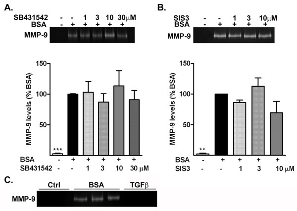 Albumin-induced increase in matrix metalloproteinase (MMP)-9 occurs independently of the transforming growth factor <t>(TGF)-β</t> receptor. Representative zymogram and corresponding quantification of the level of MMP-9 release by astrocytes treated with BSA in the presence (+) or absence (−) of (a) the TGF-β receptor I inhibitor <t>SB431542,</t> or (b) the Smad pathway inhibitor SIS3; neither inhibition of the TGF-β receptor I inhibitor nor the Smad pathway inhibited albumin-induced increase in MMP-9. (c) Representative zymogram of the level of MMP-9 release by astrocytes treated with BSA and TGF-β1 (10 ng/mL). Data are representative of mean ± SEM of three independent experiments. *** P