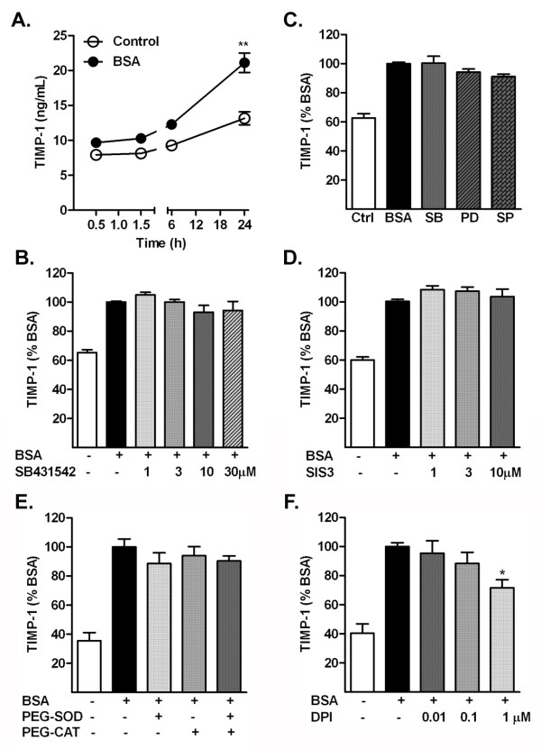 Albumin stimulates an increase in the release of tissue inhibitor of metalloproteinase (TIMP)-1 in the conditioned media by astrocytes. (a) Astrocytes exposed to BSA had a time-dependent increase in TIMP-1. (b) Levels of TIMP-1 in astrocytes treated with albumin in the presence (+) or absence (−) of the TGF-β receptor I inhibitor SB431542. (c) Levels in astrocytes treated with albumin in the presence of the p38 mitogen-activated protein kinase (MAPK) inhibitor SB203580 (SB), the extracellular signal regulated protein kinase (ERK) pathway inhibitor PD98059 (PD), and the c-Jun N-terminal kinase (JNK) inhibitor SP600125 (SP). (d) Levels in astrocytes treated with albumin in the presence (+) or absence (−) of SIS3, the Smad pathway inhibitor. (e) Levels of TIMP-1 in astrocytes treated with albumin in the presence (+) or absence (−) of the antioxidant enzymes superoxide dismutase (SOD) and catalase (CAT) or (f) the NADPH oxidase inhibitor diphenyleneiodonium chloride (DPI). Data are representative of mean ± SEM of 3–4 independent experiments, and are expressed (B-F) as a percentage of the value of the BSA-treated group. ** P
