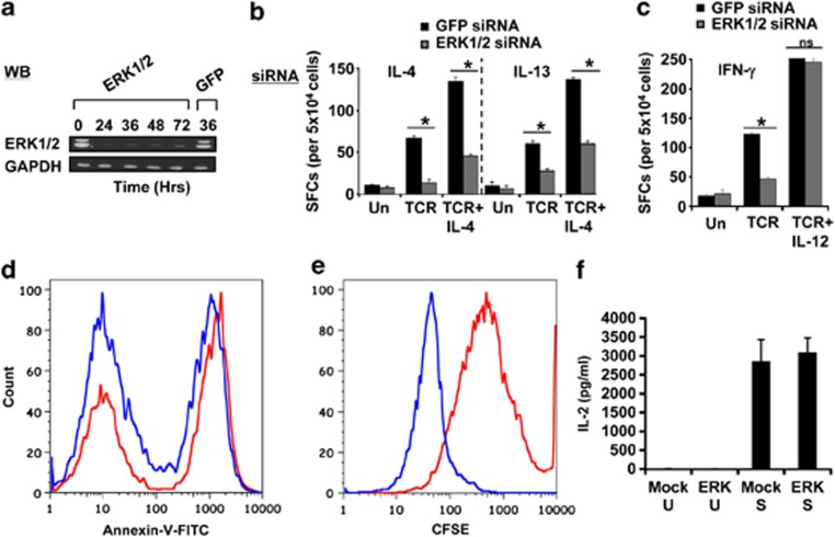 ERK selectively regulates Th2-cell differentiation. ( a ) Results of a western blot analysis, at indicated times, for ERK-1/2 in naive CD4 + T cells transfected with ERK-specific siRNA. The effect of treatment of GFP-specific siRNA on ERK levels, at 36 h later, is also included, with GAPDH as an internal loading control. ( b , c ) Effect of treatment of naive CD4 + T cells with siRNA specific for either ERK or GFP on the generation of either IL-4 and IL-13 (panel b ) or IFN-γ (panel c ) cytokine-producing cells as measured by an ELISPOT assay at day 7 of culture. The stimulation conditions tested here were activation (TCR), Th2 polarization (TCR+IL-4) and Th1 polarization (TCR+IL-12). The corresponding profiles obtained in mock (GFP)-siRNA-treated cells cultured under similar conditions are also shown. * P ⩽0.05 (one-way analysis of variance (ANOVA) test); NS=not significant. Each bar represents the mean (±s.d.) of three biological replicates in which each replicate represented a pool of cells isolated from 3 to 5 individuals. In a separate experiment, we stimulated either mock- (red line) or ERK-silenced (blue line) cells under Th2-polarizing conditions for 7 days and then measured the extent of apoptotic cell death by staining with Annexin-V, followed by flow-cytometric analysis. The profiles obtained are shown in d and represents one of three separate experiments. For e , a similar experiment was performed, except that cells were first labeled with CFSE before stimulation and the extent of cell proliferation was determined 7 days later ( n =3). f compares the concentration of IL-2 present in the supernatant of these cultures at day 7. Here, U indicates cells that were not activated, whereas S denotes the stimulated groups. Values are the mean (±s.d.) of three separate experiments.