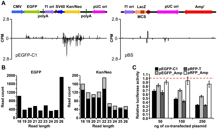 Kan/Neo cassette has a unique small RNA signature and contributes to downregulated expression of luciferase reporters. (A) Analysis of putative adenosine-deaminated small RNAs derived from Kan/Neo cassette (left panel) and pBS (right panel). The distribution of 20–24 nt reads with A/G conversions along pEGFP-C1 and pBS sequences is shown. (B) Size distribution of RNAs originating from EGFP CDS and Kan/Neo CDS sequences in HEK-293 cells. Small RNAs are sorted along the X-axis according to their length (18–26 nt long reads are shown). The Y-axis in both graphs shows the absolute number of reads carrying EGFP- (left) or Kan/Neo-derived sequences (right). The gray portion of each column indicates the fraction of reads carrying up to five A/G sequence changes. Note the absence of edited reads from EGFP CDS region. (C) Replacement of the Kan/Neo cassette by Amp r (denoted by _Amp) relieves repression of luciferase reporters. HEK-293 cells were co-transfected with 100 ng/well of each luciferase reporter and 0–250 ng of one of the four plasmids shown above the graph. The total amount of transfected DNA was kept constant by adding pBS. Renilla luciferase activity relative to the sample co-transfected with pBS (dashed line) is shown. Error bars = SEM. Data represent two independent experiments done in quadruplicates.