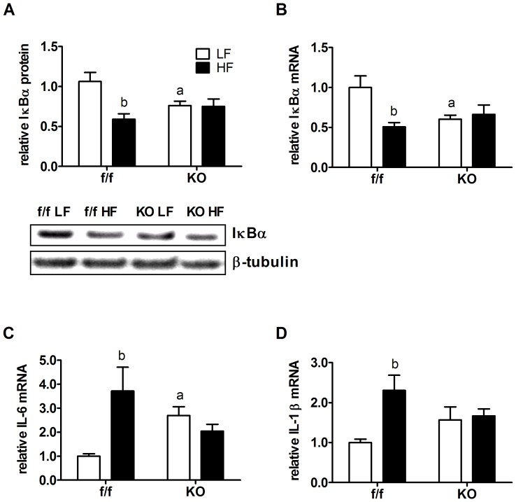 Gene-diet interactions determine hypothalamic inflammatory signaling and gene expression in neuronal PPARδ KO mice. Protein and mRNA were isolated from bisected sections of mediobasal hypothalamus of f/f and KO mice fed LFD or HFD for 33 weeks. (A) Total hypothalamic protein extracts were subjected to Western blot analysis using an antibody directed against IκBα. Levels of β-tubulin were determined and used as a loading control. Densitometery of blots yielded relative intensity of protein levels (n = 6). Insert of A shows a representative Western blot. Hypothalamic mRNA levels of (B) IκBα and inflammatory cytokines (C) IL-6 and (D) IL-1β in f/f and KO mice measured by RT-PCR after the study period. Target gene mRNA levels were normalized to endogenous RPL13A levels. Values are represented as group mean ± SEM relative to the LF f/f control group. Statistical significance is designated by a ( p