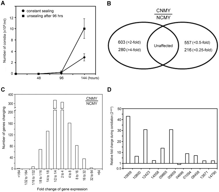The genome-wide analysis of changes in mRNA abundance during conidiation. ( A ). Measurement of the conidial density of M. oryzae on polycarbonate membrane-laid OMA plates at the indicated times. ( B ). The number of genes induced (left) or repressed (right) during conidiation based on the comparison of RNA levels of non-conidiating mycelia (NCMY) with conidiating mycelia (CNMY) of M. oryzae . ( C ). The number of genes induced (right) or repressed (left) with fold change values during conidiation of M. oryzae . ( D ). Validation of the microarray data by qRT-PCR. Transcript levels of each gene in CNMY were normalized to β -tubulin and expressed as relative values, with 1 corresponding to the NCMY. Each of five-digit number on the x-axis indicates the MGG locus number.