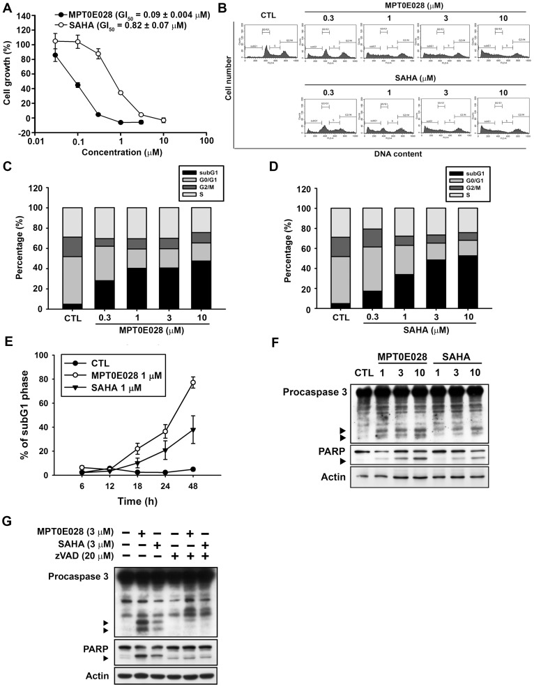 The effects of MPT0E028 on cell growth and cell cycle progression in human HCT116 cells. (A) Concentration-dependent effect of MPT0E028 and SAHA on cell growth. HCT116 cells were incubated without or with the indicated concentrations of MPT0E028 or SAHA for 48 h. Cell growth was evaluated by SRB assay. Data were expressed as mean±S.E.M. of at least 3 independent experiments. (B) Concentration-dependent effects of MPT0E028 and SAHA on cell cycle progression. HCT116 cells were treated without or with the indicated concentrations of MPT0E028 or SAHA for 24 h and were analyzed by flow cytometry for cell cycle distribution. (C, D) Data shown are the means of at least 3 independent experiments. (E) Time-dependent effects of MPT0E028 and SAHA on subG1 population. HCT116 cells were treated without or with 1 µM MPT0E028 or SAHA for the indicated time interval and were analyzed by flow cytometry for subG1 population. (F) MPT0E028 induced-caspase 3 and PARP activation. HCT116 cells were treated without or with the indicated concentration of MPT0E028 or SAHA for 24 h subject to western blot for caspase 3 and PARP analysis. (G) MPT0E028 induced casepase-dependent cell apoptosis. HCT116 cells were treated without or with 3 µM MPTE028, SAHA or 20 µM z-VAD-fmk for 24 h and subjected to western blot for caspase 3 and PARP analysis.