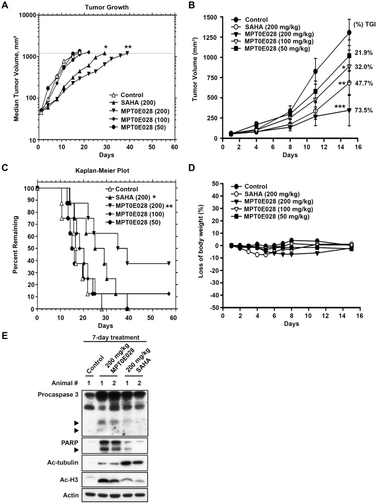 The effect of MPT0E028 on the growth of HCT116 cells  in vivo . All tumors grew to the 1,200-mm 3  endpoint volume. (A) Tumors were measured regularly and growth delay was calculated for treatment groups relative to control tumors (TGD). (B) Kaplan-Meier survival analysis was based on the tumor growth endpoint. (C) Inhibition of tumor growth curves represented a mean±SEM and percentage change in mean tumor volume (percent TGI). (D) Body weights were measured daily during the first week and then 2 times per week. The body weight ratio was calculated relative to the baseline measurement. (E)  In vivo  effect of MPT0E028 on the expression of caspase 3, PARP, acetyl-histone H3 and acetyl-µ-tubulin in HCT116 xenograft tumors as determined by western blotting.