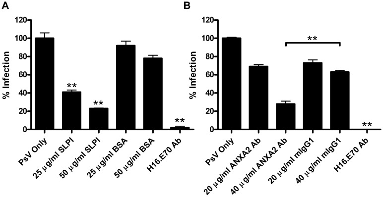 HPV16 PsV infection decreases following <t>SLPI</t> treatment or anti-annexin A2 antibody inhibition of A2t. HaCaT cells were infected with HPV16 pseudovirions containing a GFP plasmid. Infectivity was scored at 48 h post infection by enumerating GFP-positive cells by flow cytometry. (A) Cells were preincubated with increasing amounts of SLPI or <t>BSA</t> for one hour at 4° prior to PsV infection. The mean percentage of HPV16 PsV infected cells (GFP-positive) normalized to the PsV only group ± SD are presented. (** P