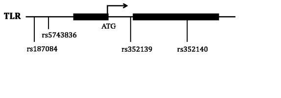 Luciferase reporter activity of TLR9 (promoter-intron) plasmid constructs. a ), schematic of four reporter gene constructs that contains TLR9 promoter- intron region with TTA, CCG, CTG and TCG at position −1486, -1237, and +1174 polymorphic sites, respectively. b ), luciferase expression of the four constructs in THP-1 cells and pGL4.10 as negative control. The luciferase activity levels are mean values of three (3) independent experiments that were all carried out in triplicate. Anova test and t-test were used to test for statistical significance. P value of