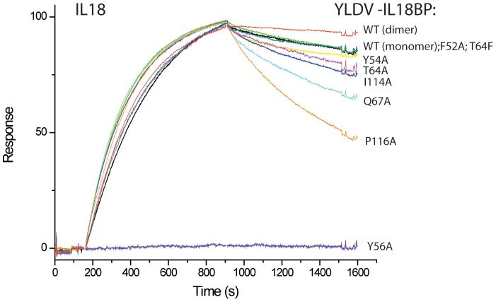 Biacore SPR Analysis of YLDV-IL18BP mutants. Biotinylated IL18 was captured on a BIAcore streptavidin-coated CM5 chip, and its binding with IL18BP was monitored with a BIAcore 3000 sensor. All the YLDV-IL18BP proteins were expressed in E. coli as SUMO fusion and purified to near homogeneity. The IL18BP mutants were derived from the monomeric form of the protein with the HVEC mutation. The injection of IL18BP started at ∼150 s and stopped at 900 s. The colored lines are the responses obtained with different IL18BP mutants and normalized to a maximum of 100 resonance units (RU) (except for Y56A) for ease of comparison.