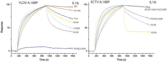 Biacore SPR analysis of IL18 mutants. Biotinylated YLDV-IL18BP and ECTV-IL18BP were captured on two different flow cells in a BIAcore streptavidin-coated CM5 chip, and their binding with IL18 was monitored simultaneously with a BIAcore 3000 sensor. The injection of IL18 started at ∼150 s and stopped at 900 s. The colored lines are the responses obtained with different IL18 mutants and normalized to a maximum of 100 RU (except for P57R, S105R for YLDV-IL18BP) for ease of comparison. YLDV-IL18BP and ECTV-IL18BP were expressed and secreted from mammalian cells and underwent in vitro biotinylation as described in Materials and Methods .