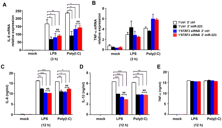 Transfection of miR-223 mimics to STAT3-siRNA pretreated cells abolishes its ability to inhibit IL-6 production. (A, B) RAW264.7 cells were first transfected with STAT3 siRNA or ctrl RNAs, 18 h later, cells were secondly transfected with ctrl or miR-223 mimics. After 24 h, cells were stimulated with LPS or poly (I∶C) for 3 h. IL-6 and TNF-α mRNA expression were analyzed by q-PCR. (C–E) Cells were treated as described in (A, B), IL-6, TNF-α and IL-1β production were measured by ELISA after 12 h stimulation with LPS or poly (I∶C). *** p