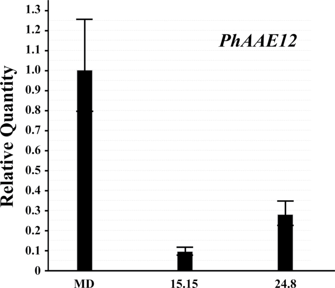 PhAAE comparative transcript accumulation analysis between MD and two independent, homozygous T 2 ir-PhAAE lines (15.15 and 24.8). 50ng total RNA was used per reaction in all cases for one-step qRT-PCR with RNA isolated from stage 8 flowers at 16.00h. Histograms are representative of multiple experiments and multiple biological replicates, and analyzed by the ∆∆Ct method with PhFBP1 and Ph18S as the internal references. The individual petunia transcript analyzed is PhAAE (mean±SE; n =3).