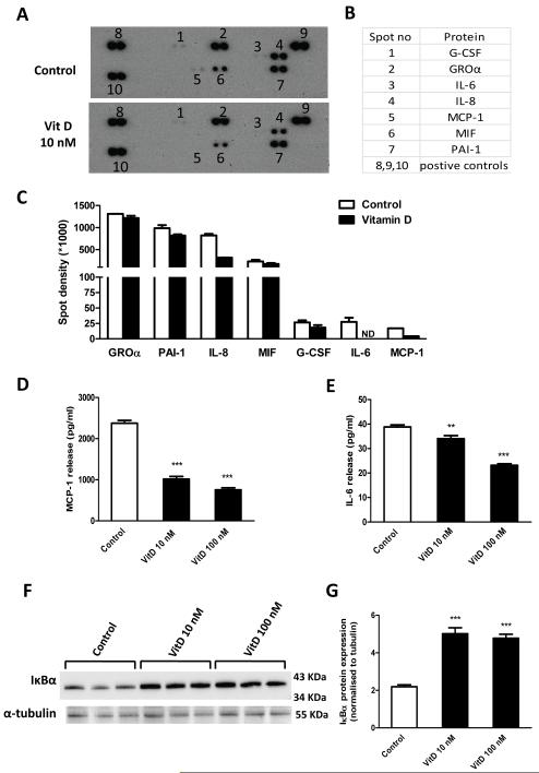 Effects of vitamin D 3 on cytokine secretion profile and NFκB activation. Preadipocytes were pretreated with or without vitamin D 3 (10 nM) for 24 h. Cell culture medium was harvested 24 h later, mixed with a cocktail of biotinylated detection antibodies and then incubated with a human cytokine array (panel A, R D). (A) Signals were detected by chemiluminescence. (B) The table shows the location of detected proteins on the membrane. (C) Detected signals were quantified as the pixel density. (D-E) levels of MCP-1 and IL-6 release into cell culture medium, measured by ELISA. Results are expressed as means ± SEM for groups of 6; the results were confirmed by three independent experiments. (F-G) preadipocytes were pre-incubated with vitamin D 3 (10 and 100 nM) for 24 h; protein expression of <t>IκBα</t> in cell lysates was analyzed by western blotting (F) and the signals quantified by densitometry (G); the results were confirmed by two independent experiments. ** P