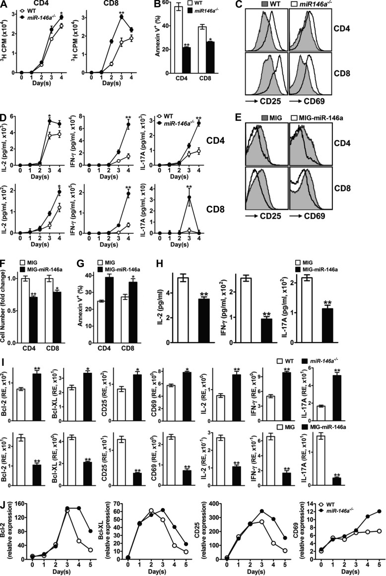 miR-146a regulates the various aspects of T cell activation induced by TCR stimulation. (A) [ 3 H]Thymidine incorporation analysis of proliferation of purified WT or miR-146a −/− CD4 and CD8 T cells stimulated with plate-bound anti-CD3 (10 µg/ml) + anti-CD28 (1 µg/ml) for 4 d. (B) Annexin V staining analysis for apoptosis of WT or miR-146a −/− CD4 and CD8 T cells (gated as CD4 + and CD8 + from the SP/LN cell culture, respectively) stimulated with soluble anti-CD3 + anti-CD28 (1 µg/ml each) for 4 d. (C) Flow cytometry analysis of surface activation marker expression on WT or miR-146a −/− CD4 and CD8 T cells (gated as CD4 + and CD8 + from the SP/LN cell culture, respectively) stimulated with soluble anti-CD3 + anti-CD28 (1 µg/ml each) for 3 d. (D) ELISA analysis of effector cytokine production of purified WT or miR-146a −/− CD4 and CD8 T cells stimulated with plate-bound anti-CD3 (10 µg/ml) + anti-CD28 (1 µg/ml) for 4 d. (E) Flow cytometry analysis of surface activation marker expression on WT CD4 and CD8 T cells transduced with MIG–miR-146a or control MIG retroviral vectors and stimulated with soluble anti-CD3 + anti-CD28 (1 µg/ml each) for 3 d (gated as CD4 + GFP + and CD8 + GFP + from the SP/LN cell culture, respectively). (F) Relative cell number fold change of WT CD4 and CD8 T cells transduced with MIG–miR-146a or control MIG retroviral vectors and stimulated with soluble anti-CD3 + anti-CD28 (1 µg/ml each) for 3 d (gated as CD4 + and CD8 + from the SP/LN cell culture, respectively; counts of T cells transduced with MIG = 1). (G) Annexin V staining of WT CD4 and CD8 T cells transduced with MIG–miR-146a or control MIG retroviral vectors and stimulated with soluble anti-CD3 + anti-CD28 (1 µg/ml each) for 4 d (gated as CD4 + GFP + and CD8 + GFP + from the SP/LN cell culture, respectively). (H) ELISA analysis of effector cytokine production of WT SP/LN cells transduced with MIG–miR-146a or control MIG retroviral vectors and stimulated with soluble anti-CD3 + anti-CD2