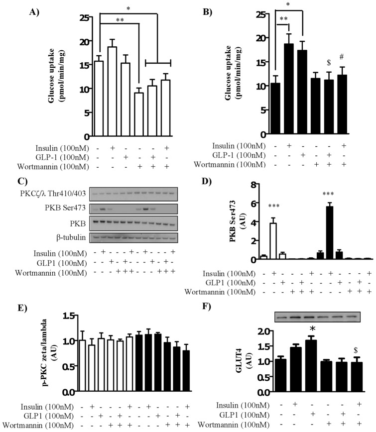 The effect of GLP-1 on glucose uptake in myocytes cultured in normal glucose media is PI3K-dependent. Satellite cells were isolated from lean, healthy males (n = 6), and differentiated in either high glucose (22 mM, open bars) or normal glucose (5 mM, black bars) media for seven days. Myocytes were treated with 100 nM wortmannin (40 minutes) in the absence or presence of either 100 nM insulin or 100 nM GLP-1 for the penultimate 30 minutes before assessing 2-deoxyglucose uptake in to myocytes (A) cultured in high glucose (22 mM) or (B) normal glucose (5 mM) media. (C) Lysates were immunoblotted for phosphorylation status of PKB/Akt and PKCζ/λ and total protein amount of PKB/Akt under the same conditions. Immunoblots were quantified (n = 6), normalized to total protein and expressed as arbitrary units (D and E). (F) Total protein amount of GLUT4 was assessed by immunoblot and quantified (n = 5). Significant changes from basal levels are indicated by * (P