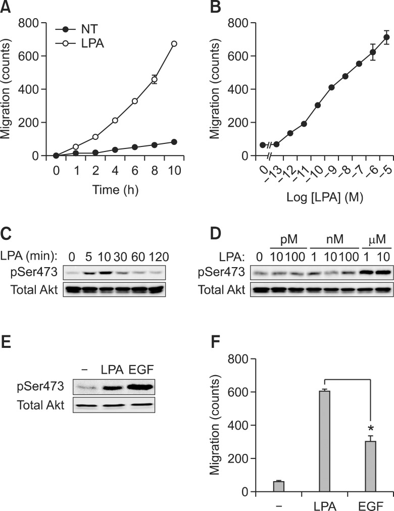 LPA dramatically induces cancer cell migration compared to EGF. A549 cell migration was stimulated with LPA (10 µM) for the indicated time or at the indicated dose for 10 h (A, B). Akt phosphorylation was treated with LPA (10 µM) for the indicated time or at the indicated dose of LPA for 10 min and detected by western blotting with phospho-Akt (Ser473) and total Akt (C, D). Western blotting (E) and migration (F) were determined by individually treatment with LPA (10 µM) or EGF (50 ng/ml). * P