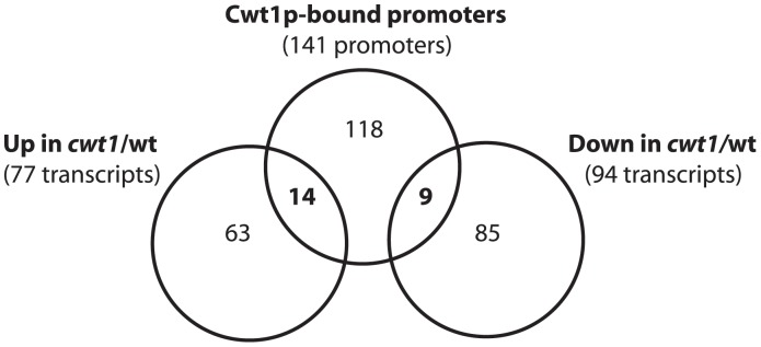 Cwt1p is a direct regulator of nitrosative stress responsive-genes. Relationship between Cwt1p-bound genes and genes showing altered expression in the cwt1 mutant challenged by 0.1 mM DPTA NONOate during 15 min. The symbol (*) and (**) indicate a significant difference compared to the WT strain using t -test (P
