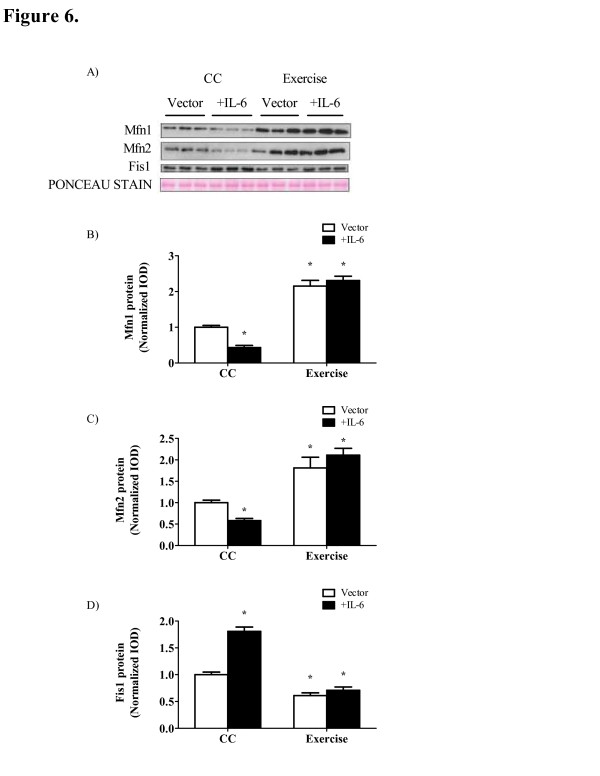Exercise training reduces IL-6 induced alterations in mitochondria dynamics, apoptosis and <t>FoxO</t> phosphorylation. A) Representative Western blot of Mfn1, Mfn2 and <t>FIS1</t> protein in the gastrocnemius of Apc Min/+ mice. B) Mfn1, C) Mfn2 and D) FIS1 protein expression normalized to sedentary mice treated with the control vector. E) upper - Representative Western blot of total and phosphorylated FoxO proteins; lower - ratio of phosphorylated to total FoxO protein expression normalized to cage control mice. F) Bax mRNA expression. Data are normalized to cage control mice. Values are means ± SE. Significance was set at P
