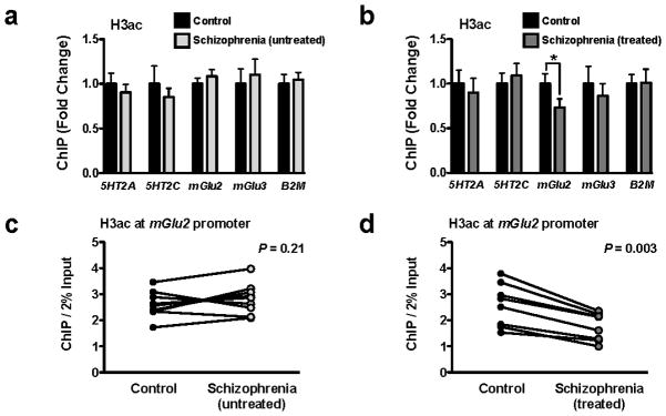 Decreased acetylation of histone H3 at the mGlu2 promoter in prefrontal cortex of treated, but not untreated, schizophrenic subjects ( a,b ) Digested chromatin was immunoprecipitated with antibody recognizing acetyl-histone H3 (H3ac), and the level of association of the 5HT2A, 5HT2C, mGlu2, or mGlu3 promoters was measured by qPCR. The promoter of β 2 - microglobulin ( B2M ) was included as internal control. Experiments were performed in frontal cortex of untreated schizophrenic subjects and matched controls ( a ), and in frontal cortex of atypical antipsychotic-treated schizophrenic subjects and matched controls ( b ). H3ac at mGlu2 promoter in treated schizophrenics: t = 3.96. The α value was corrected for multiple independent null hypotheses by using the Holm's sequentially rejective Bonferroni method. * P