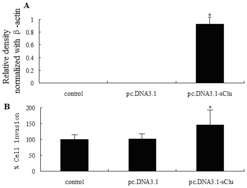 Effect of sCLU overexpression on the invasive capability of HepG2 cells. ( A ) Western blot analysis of sCLU expression in cells transfected with pc.DNA3.1 (vector) or pc.DNA3.1-sCLU. Histogram represents the relative density of sCLU bands normalized to β-actin; ( B ) Histogram showing the invasive capability of transfected HepG2 cells. The experiment was done in triplicate and the value obtained from pc.DNA3.1 transfected cells was set at 100%. Each bar represents mean ± SE ( n = 3); * p