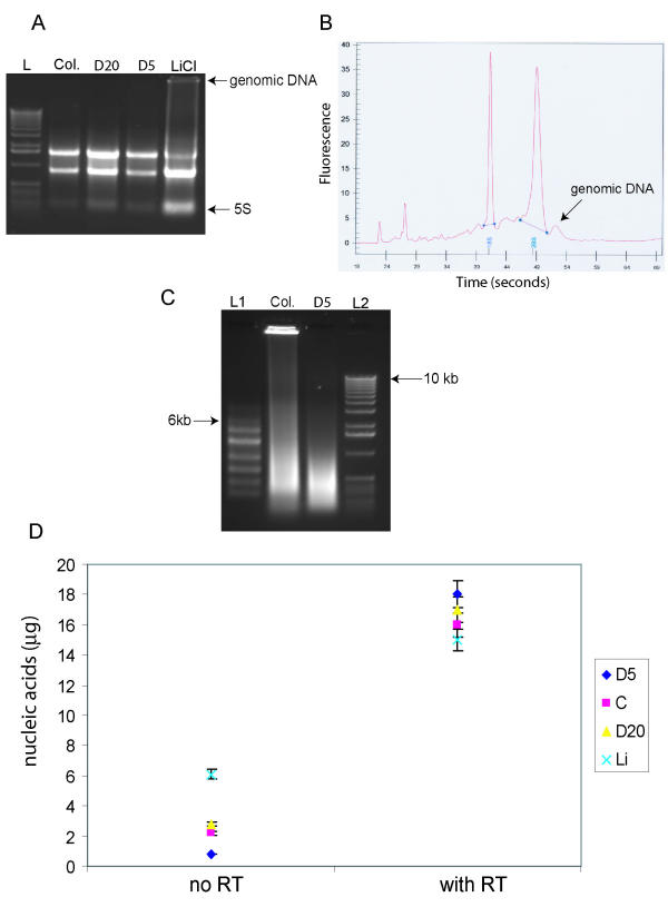 Effect of genomic DNA contamination in total RNA . (A) 1% agarose gel of purified MCF-7 total RNA samples. L-1 kb ladder (Invitrogen); Col. – column purified RNA; D20 – DNase treated/PCI extracted (RNA concentration – 20 μg/100 μl); D5 – DNase treated/PCI extracted (RNA concentration – 5 μg/100 μl); LiCl – DNase treated/Lithium Chloride purified. (B) Agilent Bioanalyzer image of MCF-7 total RNA sample purified using column method. Arrow pointing at shoulder after 28S band indicating genomic DNA carry over. (C) 1% agarose/formamide denaturing gel of MCF-7 aRNA. L1 – 6000 RNA ladder (Ambion); L2-1 Kb ladder (Invitrogen). (D) Absorption at 260 nm of nucleic acid products derived from the 4 total RNA purification methods. 2 μg of total RNA from each of the five cell lines was amplified with and without reverse transcriptase being added to the cDNA synthesis reaction (with RT and no RT respectively). C – column; Li – LiCl precipitation; D5/D20 – as in A. Cell lines included MCF-7, ZR-75-1-1, OCUB-M, Cal51, and HCT-1187.