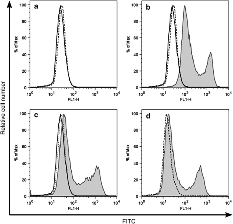 Screening of hybridoma clones for Bcl-G-specific monoclonal antibodies. Hybridoma supernatants were screened for antibodies that detect HA-tagged Bcl-G overexpressed by 293T cells using intracellular immunofluorescent staining and FACS analysis. FITC-conjugated goat anti-rat Ig secondary antibodies (dotted line in a – c ) were used as the secondary reagent after a first incubation with hybridoma culture supernatant (solid line in a – c ), sera from immunised rats ( b ) or supernatant from hybridoma clone 2E11 ( c ). Antibodies against HA (dotted line represents FITC-conjugated anti-mouse secondary antibody only, used as a negative control) were used as a positive control ( d )