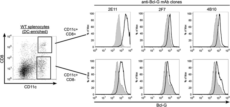 Intracellular staining and FACS analysis using Bcl-G-specific mAbs reveals higher Bcl-G expression in CD8 + splenic cDCs compared with other DC subsets. To determine the levels of Bcl-G expression in the CD8 + and CD8 − DC subsets, DC-enriched splenocyte cell suspensions were surface stained with CD11c-FITC and CD8-APC monoclonal antibodies followed by intracellular staining with biotinylated Bcl-G-specific mAbs and incubation with PE-streptavidin (solid line). Cells stained with PE-streptavidin alone were used as negative controls (tinted grey). Samples were analysed using a flow cytometer and representative FACS plots are shown