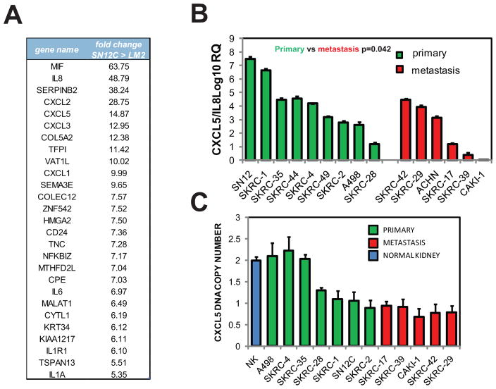 CXCL chemokines expression decreased during RCC metastatic progression (A) Genes showing 5-fold or greater alteration in expression in the SN12C cell line compared to the LM2 cell line. (B) Expression of IL8 + CXCL5 in a panel of RCC cell lines isolated from primary or metastatic tumors determined by Q-PCR. Error bars represent STDEV. P-values were obtained using Student's t-test of comparing primary cells versus metastatic cells. (C) Comparison of CXCL5 DNA copy number in primary and metastatic cell lines using TaqMan copy number assay