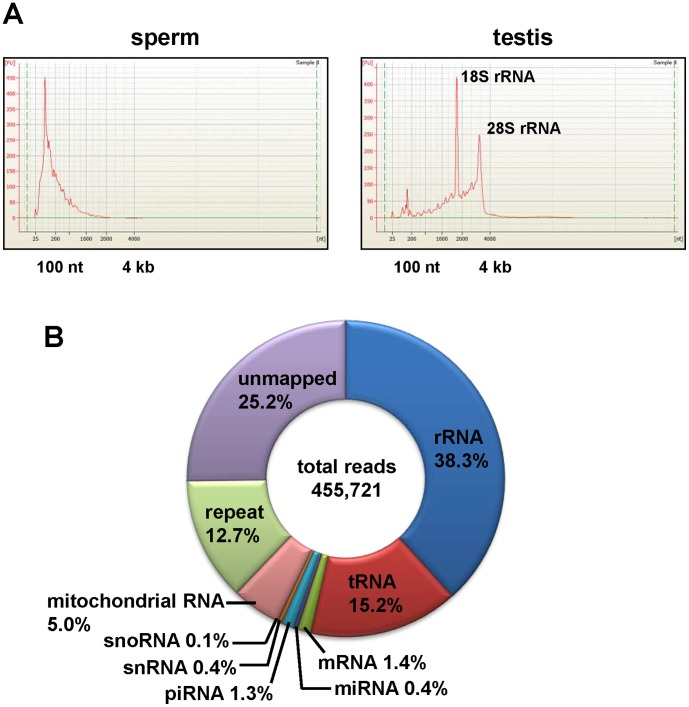 Size distribution of testis and sperm RNAs. Electropherograms were obtained using the <t>RNA</t> 6000 <t>Nano</t> Chip. A. RNA prepared from mouse sperm contained no or very low levels of long RNAs, including ribosomal RNAs (18S- and 28S-rRNA) compared with the total RNA from mouse testis (B) . C. Classification of all sequence reads in the mouse sperm total RNA library.