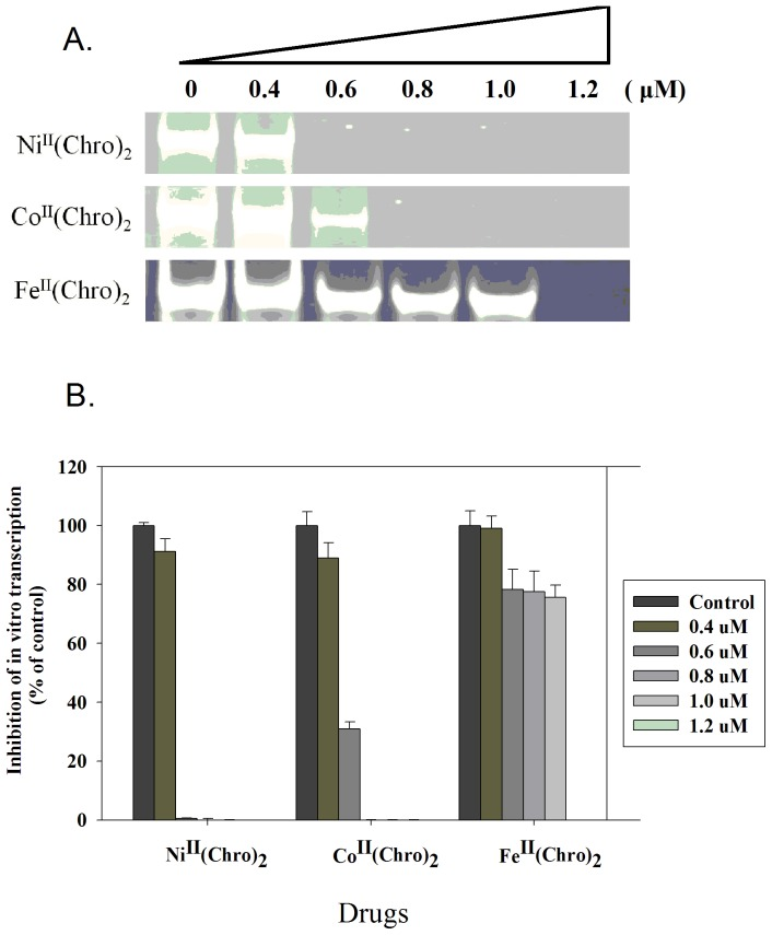 Inhibition of in vitro transcription by Fe(II)-, Co(II)-, and Ni(II)-containing dimeric Chro complexes. ( A ) The effects of Co II (Chro) 2 , Fe II (Chro) 2 , and Ni II (Chro) 2 at various concentrations on T7 RNA polymerase activity. ( B ) Quantification of the percentage of RNA polymerase activity on drug inhibition at various concentrations relative to the control (no drug treatment). The data represent the mean values ±SDs from three separate experiments.