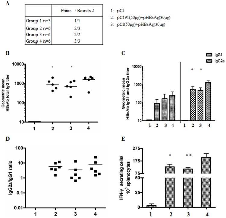 Co-application of pC191 inhibited the effective boosting of HBsAg-specific immune response. BALB/c mice (n = 6 for each group) were immunized three times by in vivo electroporation with different doses of the plasmids pCI, pHBsAg, pC191, or combinations as indicated in (A). Sera of immunized mice were collected on 10th days after the third immunization, serially diluted, and tested by ELISA assay. (B) Total HBsAb IgG responses. (C) HBsAb IgG subclasses IgG1 and IgG2a. (D) Ratios of HBsAb IgG2a/IgG1. (E) Splenocytes were collected from mice at day 10 after the third immunization and subjected to ELISPOT assay. Splenocytes were re-stimulated with a HBsAg peptide (H-2L d CTL epitope aa 29–38). HBsAg specific IFN-producing cells were determined by identified by spot formation. The numbers represent the means of spot-forming cells per 2×10 5 splenocytes. The error bars represent the standard deviation. Statistically significant differences between the groups are displayed as *(p