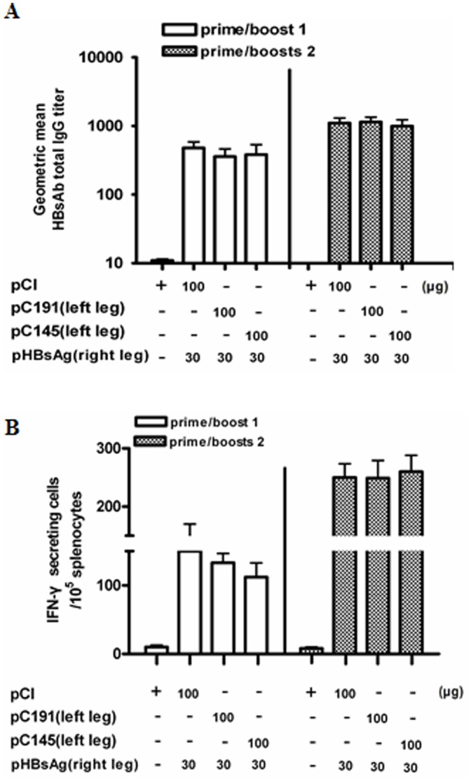 Co-application of pC191 at the different sites cannot prevent the priming of immune responses to HBsAg. BALB/c mice (n = 6 for each group) were immunized three times by in vivo electroporation with different plasmids at different leg. Sera of immunized mice were collected on the 10 th day after second and third immunizations, serially diluted, and testd by ELISA assay. (A) Total HBsAb IgG responses. Splenocytes were collected from mice at day 10 after the third immunization and subjected to ELISPOT assay. (B) Splenocytes were re-stimulated with an HBsAg peptide (H-2L d CTL epitope aa 29–38).HBsAg specific IFN-producing cells were determined by identified by spot formation. The numbers represent the means of spot-forming cells per 2×10 5 splenocytes. The error bars represent the standard deviation. Statistically significant differences between the groups are displayed as *(p