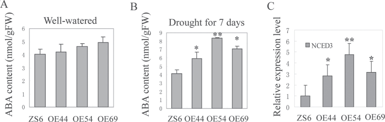 Endogenous ABA content in SpUSP -overexpressing and wild-type 2 month-old plants measured by HLPC. (A) ABA content in well-watered condition. (B) ABA content after withholding water for 7 d. (C) Relative expression level of NCED3 in OE and wild-type (ZS6) lines under drought stress via qRT-PCR. Variance analysis was performed to determine significant differences (* P
