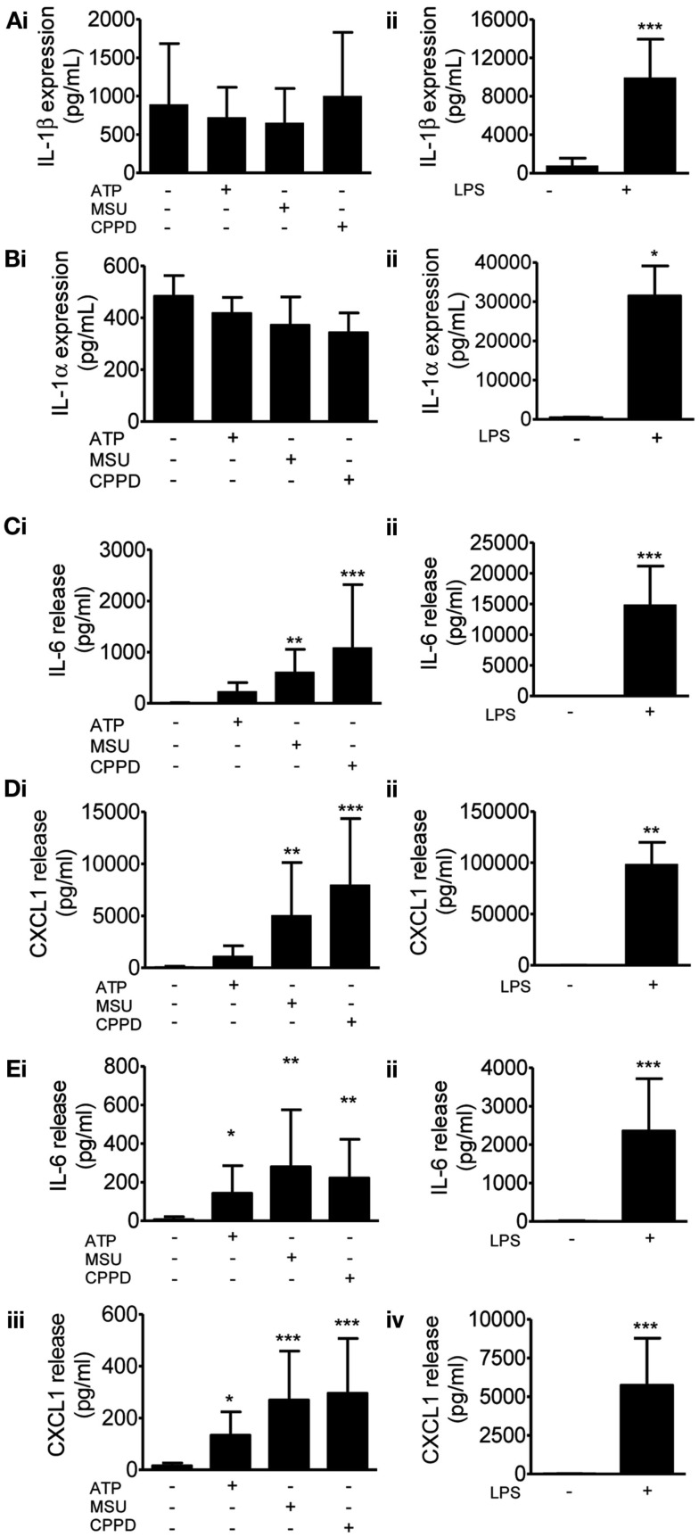 Effects of DAMPs on pro-inflammatory protein levels in cultured mixed glia . Protein levels of pro-inflammatory mediators were measured by specific ELISAs after 24 h (A–D) or 4 h (E) exposure to the NLRP3-activating DAMPs ATP (5 mM), MSU, and CPPD [both 250 μg/ml; (Ai) ] or the PAMP LPS [1 μg/ml; (Aii) ]. The proteins analyzed were IL-1β (A) , IL-1α (B) , IL-6 (C,E) , CXCL1 (D,E) . Data are pooled samples from at least five separate experiments. *** P