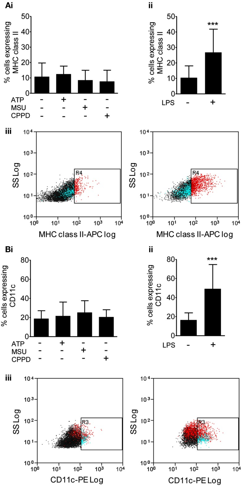 Effects of DAMPs on surface marker expression in microglia cells . The expression of surface markers of microglia activation MHC class II (A) , and CD11c (B) were measured after 24 h exposure to the NLRP3-activating DAMPs ATP (5 mM), MSU, and CPPD [both 250 μg/ml; (Bi) ] or the PAMP LPS [1 μg/ml; (Bii) ]. Flow cytometry was used to quantify surface marker expression. Data are expressed as a percentage of cells that co-express CD45 and CD11b. Representative dot plots showing the CD45 and CD11b expressing cell population plus and minus LPS treatment are also shown (Biii) . Data are pooled samples from at least five separate experiments. *** P