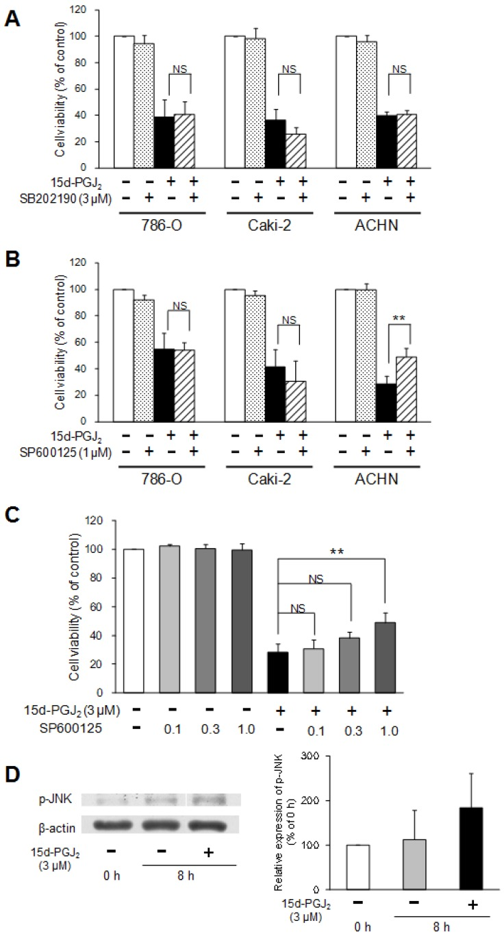 Involvement of the p38 and JNK MAPK pathway in 15d-PGJ 2 -induced cell death. Effects of a p38 MAPK inhibitor, <t>SB202190</t> (A), or JNK inhibitor, SP600125 (B, C), on 15d-PGJ 2 -induced cell death and the effects of 15d-PGJ 2 on phosphorylation of JNK (D). Cells were precultured for 24 h at 5 × 10 3 /well in 96-well plates and exposed to 15d-PGJ 2 at approximately the IC 50 in the presence or absence of SB202190 (3 μM) or SP600125 (0.1, 0.3, 1 μM) for 24 h. Cell viability was assessed by fluorescent assay, and data represent the mean ± S.D. from 4 independent preparations. Statistical significance was assessed by t-test or Dunnett's test. To detect proteins, cells were precultured for 24 h in 100-mm dishes. Cells were then treated with 15d-PGJ 2 at 3 μM for 0 and 8 h. Protein (15 μg) was analyzed by Western blotting for the expression of phospho-JNK. Relative protein levels were quantified using ImageJ, and each phospho-JNK signal was normalized to the β-actin signal. The representative bands and the results of densitometric analysis from three independent preparations were described, and data represent the mean ± S.D. from 4 independent preparations.