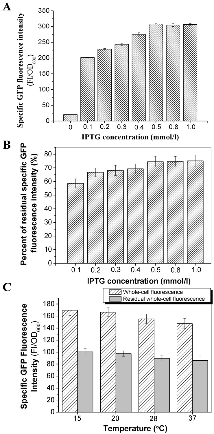 Effect of IPTG concentrations and culture temperatures on the transport and surface-binding activities of InaQ-N/GFP. (A) Correlation between IPTG concentration and GFP fluorescence intensity of E. coli JM109/pMB102 expressing the InaQ-N/GFP fusion protein. (B) Residual GFP fluorescence intensity of intact cells after pronase proteolysis. (C) Whole-cell and residual GFP fluorescence intensity of the outer membrane fractions of JM109/pMB102 cells cultured at different temperatures and without/with pronase proteolysis.