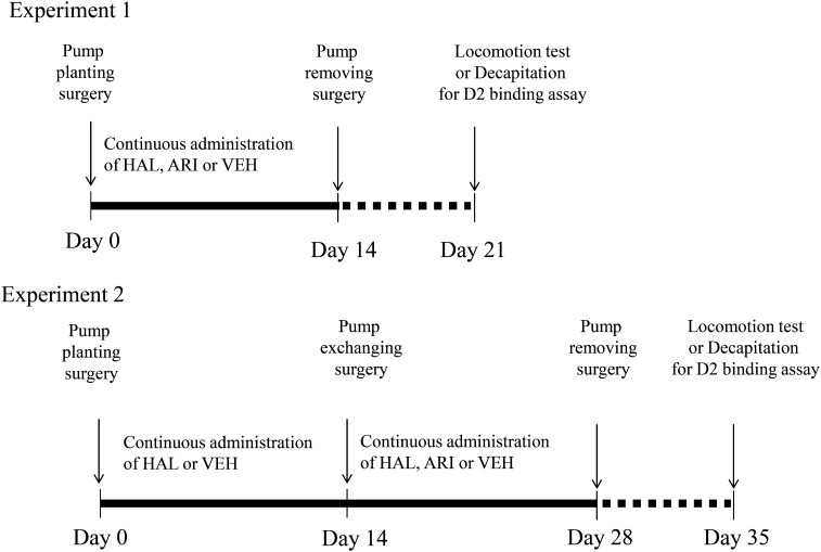 Graphic depiction of the sequence of treatment and testing for experiments 1 and 2. In Experiment 1, an <t>Alzet</t> osmotic <t>minipump</t> was implanted into each rat, and drugs were administered starting on Day 0. The minipump was removed on Day 14, and the evaluation of either locomotor response to methamphetamine or the decapitation to evaluate D 2 receptor binding occurred on Day 21, ie, on the seventh day following treatment cessation. In Experiment 2, a minipump was implanted into each rat, and drugs were administered starting on Day 0; the first minipump was exchanged for a second minipump on Day 14. The second minipump was removed on Day 28, and the evaluation of either locomotor response to methamphetamine or the decapitation to evaluate D 2 receptor binding occurred on Day 35, ie, on the seventh day following the cessation of 2 consecutive treatment periods (total, 28 days). HAL indicates 0.75 mg/kg/d of haloperidol; ARI, 1.5 mg/kg/d of aripiprazole; and VEH, 2% glacial acetic acid/H 2 O solution as vehicle.