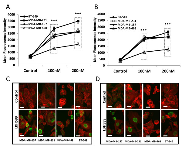 Panobinostat increases histone H3 (Lys9) and H4 (Lys8) acetylation in TNBC cell lines . Cells were treated with panobinostat (100, 200 nM) or vehicle (DMSO) for 18 hours, fixed, permeabilized and stained for acetyl-histones (A) H3 (Lys9) or (B) H4 (Lys8) and subjected to flow cytometry. Data are presented as mean fluorescence intensity (mean ± SEM) of two independent experiments, (***, P