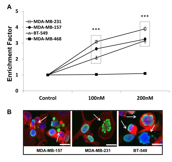 Panobinostat induces apoptosis in TNBC cells . (A) TNBC cells treated with panobinostat (100, 200 nM) or vehicle (DMSO) for 24 hours were assayed by DNA fragmentation (Cell Death ELISA) assay to assess changes in apoptosis. Data are presented as enrichment (mean ± SEM) versus control of two independent experiments (***, P