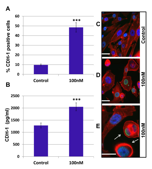 Panobinostat up-regulates CDH1 expression and initiates EMT reversal in MDA-MB-231 Cells . MDA-MB-231 cells were plated overnight and treated with panobinostat (100 nM) or vehicle (DMSO) for 24 hours. The expression of CDH1 was examined by (A) flow cytometry and (B) ELISA. Data are represented as mean ± SEM of two independent experiments, (***, P