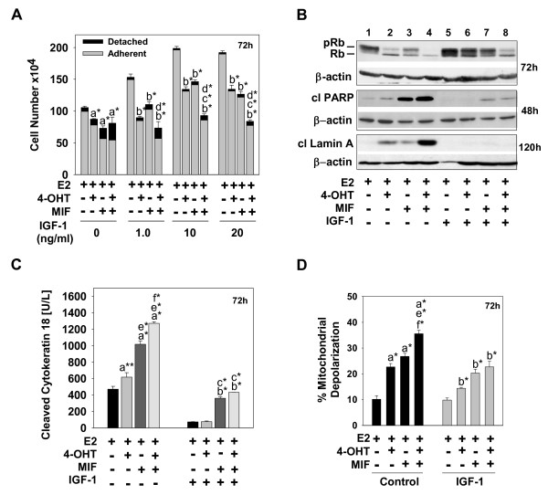 IGF-1 attenuates the cytotoxicity of hormonal treatments in ER + breast cancer cells . (a) Cell number for the adherent versus detached cell population treated with hormones in the presence or absence of various concentrations of IGF-1. (b) Relative levels of active, dephosphorylated Rb110 protein, designated Rb, relative to levels of the inactive, phosphorylated Rb110, designated pRb (top panel), cleaved PARP (middle panel), and cleaved lamin A (bottom panel) in cells undergoing hormonal treatments in the presence and absence of IGF-1. Protein was isolated from cells undergoing the designated treatments at 48, 72, and 120 hours, and immunoblot analysis determined the levels of Rb, pRb, cleaved PARP, and cleaved lamin A; β-actin served as a loading control. (c) Relative levels of cleaved cytokeratin 18 after 72 hours of the hormonal treatments in the presence and absence of IGF-1. (d) The percentage of mitochondrial membrane depolarization in cells undergoing hormonal treatments in the presence or absence of IGF-1. Adherent and detached cells were combined, stained with JC-1 mitochondrial membrane dye, and examined by using flow cytometry. (a, c, d) Data are expressed as mean ± SD ( n = 3). Comparisons were made between treatment groups, and a statistically significant difference was identified in cell number when compared with groups treated with a E2; b E2 + IGF-1; c E2 + 4-OHT + IGF-1; d E2 + MIF + IGF-1; e E2 + 4-OHT; and f E2 + MIF. *Significance at P