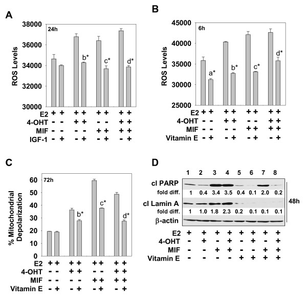 IGF-1 attenuates 4-OHT and/or MIF-induced cell death by reducing ROS levels . (a, b) ROS levels in cells undergoing hormonal treatments in the presence or absence of IGF-1 (a) or vitamin E (b) . (c) The percentage of mitochondrial membrane permeabilization in cells undergoing hormonal treatments in the presence or absence of vitamin E. (d) The levels of cleaved PARP and lamin A in cells treated with 4-OHT and/or MIF in the presence and absence of vitamin E. fold diff ., the levels of cleaved PARP or lamin A relative to levels in E2-treated cells, which were arbitrarily assigned a value of 1.0; β-actin served as a loading control. (a-d) MCF-7 cells treated with E2, E2 + 4-OHT, E2 + MIF, E2 + 4-OHT + MIF in the presence or absence of IGF-1 (20 ng/ml) or vitamin E (500 μ; M ) for the indicated times were harvested for determination of ROS levels, percentage mitochondrial membrane permeabilization, or levels of cleaved PARP and laminA, as described in Materials and Methods. Values are expressed as mean ± SD ( n = 3). Statistically significant differences are identified between comparisons of the following treatment groups: (a) E2 versus E2 + vitamin E; (b) E2 + 4-OHT versus E2 + 4-OHT + IGF-1 or E2 + 4-OHT + vitamin E; (c) E2 +MIF versus E2 + MIF + IGF-1 or E2 + MIF + vitamin E; and (d) E2 + 4-OHT + MIF versus E2+ 4-OHT + MIF + IGF-1 or E2 + 4-OHT + MIF + vitamin E. * P